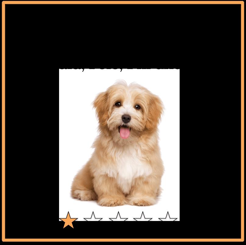 Logikrätsel Hund
